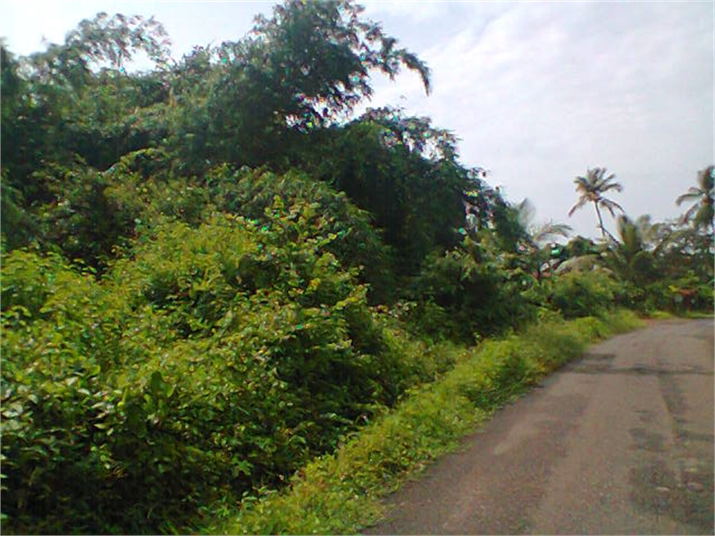 Land For Sale In Goa Near Beach