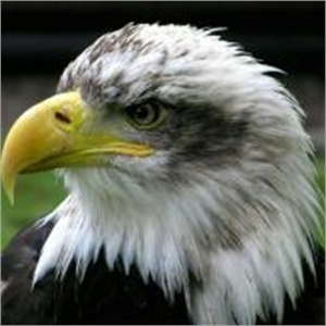 Eagle Consulting Service