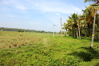 Agricultural Land / Farm Land For Sale in Chirayinkeezhu, Trivandrum