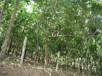 Agricultural Land / Farm Land For Sale in Karuvelil, Kollam