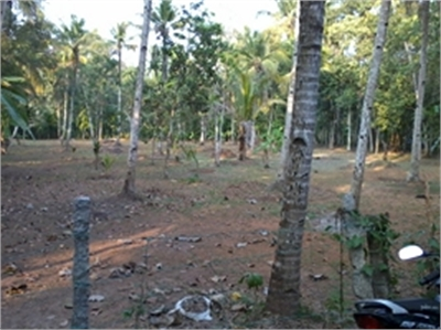 Residential Plot / Land For Sale in Mavelikara, Alappuzha