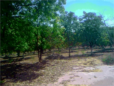 Agricultural Land / Farm Land For Sale in Wada, Thane