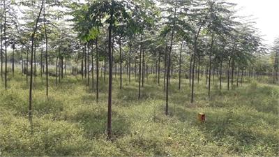 Residential Plot / Land For Sale in Karim Nagar, Hyderabad
