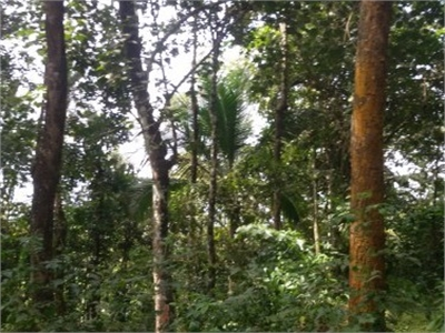 Residential Plot / Land For Sale in Perumbavoor, Kochi
